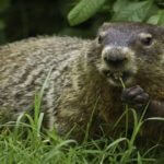 Collection of 20+ Happy Groundhog Day Quotes and Sayings